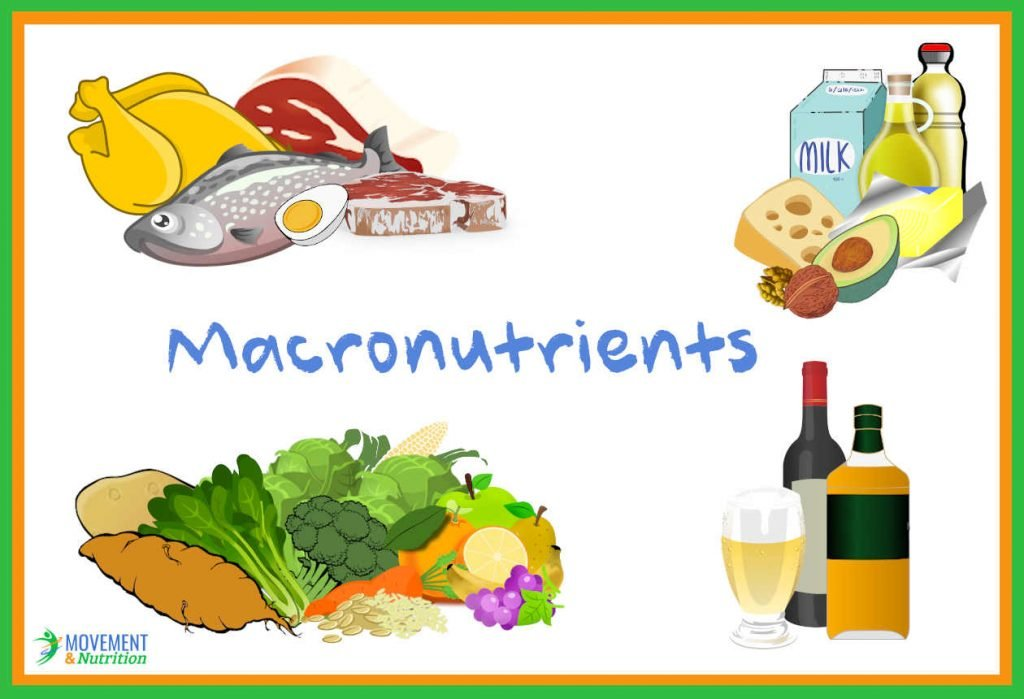 What are Macronutrients? A guide for healthy eating